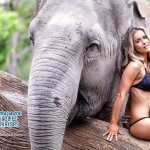 wildlife_warrior-elephant