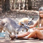 wildlife_warrior-kangaroo